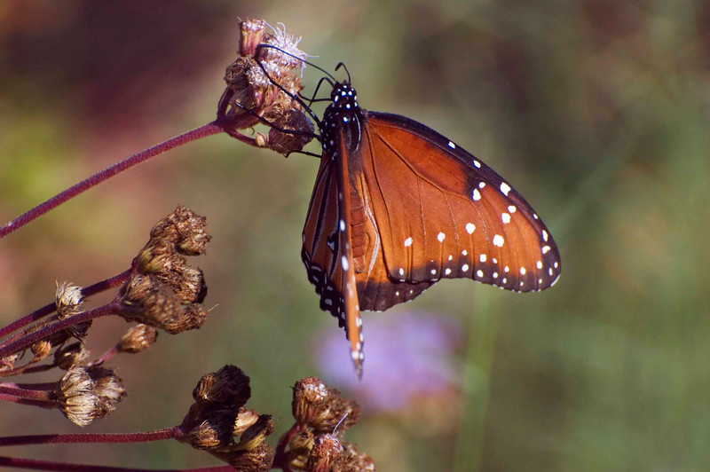 Yes, they have beautiful butterflies in Texas as well . . . .