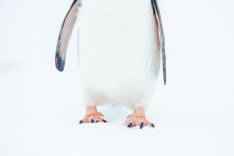 Animals in Antarctica - What you Can expect to see