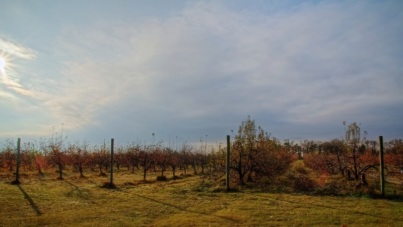 Apple Orchard L.jpg