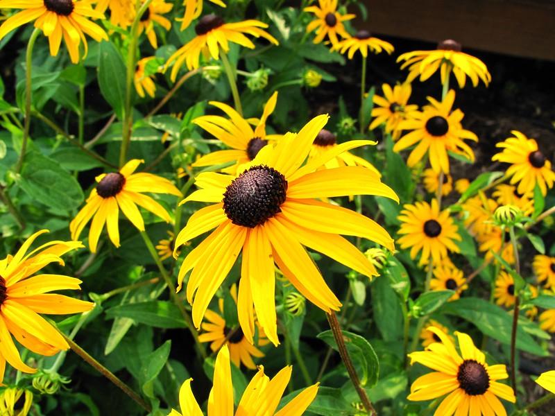Kris's flowers-2009