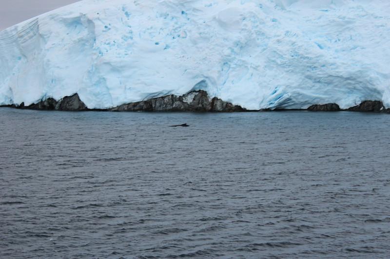 Antarctica 144.JPG