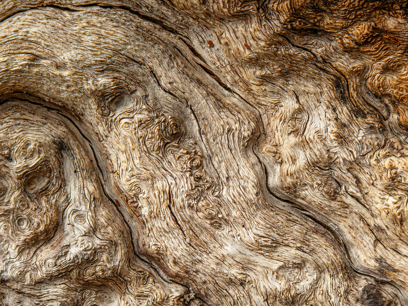 Tree detail, Almaden Quicksilver County Park, California, 2007