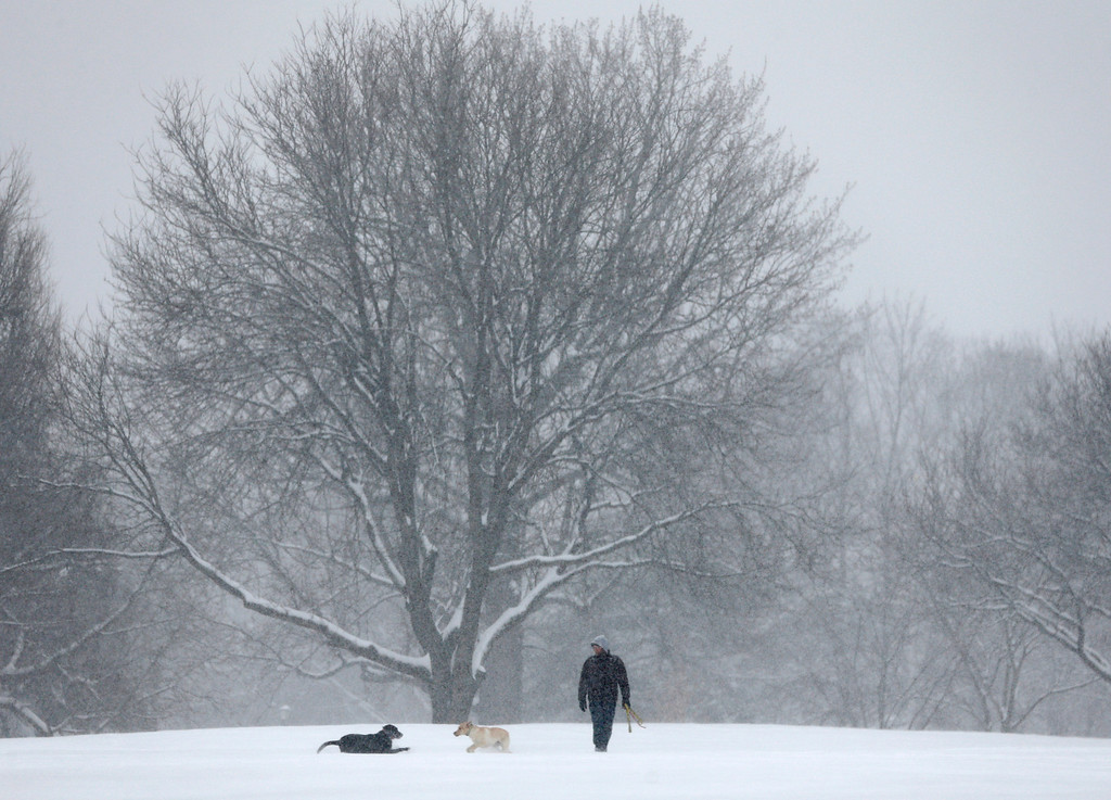 . Dogs play in the snow in Washington Park on Wednesday, Feb. 5, 2014, in Albany, N.Y. Hundreds of schools across upstate New York are closed and authorities are advising against any unnecessary travel as a snowstorm moves across the region. (AP Photo/Mike Groll)