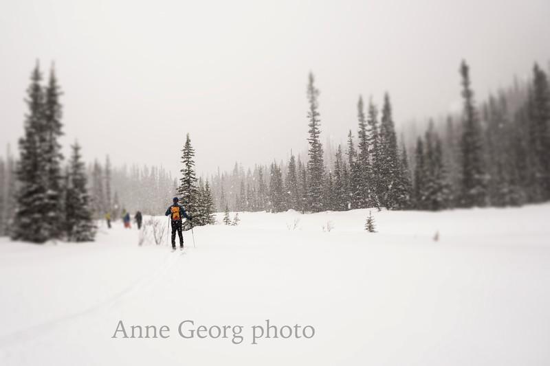 winterwonderland-3.jpg