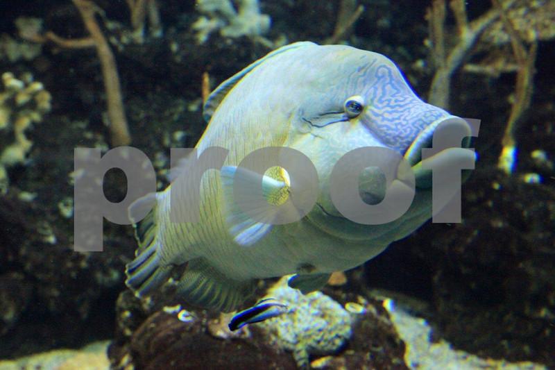 Seattle Aquarium 9143.jpg
