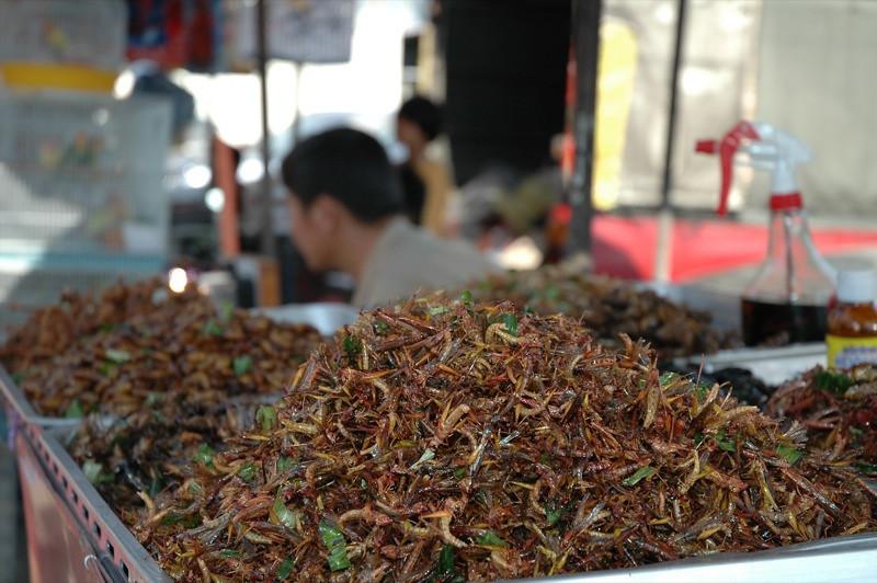 Fried Bugs - Bangkok, Thailand