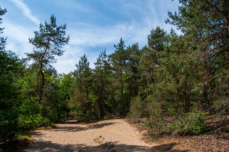 Nationaal Park Hoge Kempen - Duinengordel, omgeving Donderslag 06.jpg