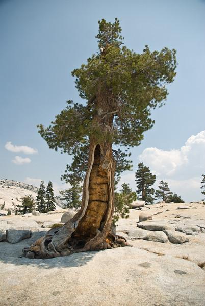 Yosemite_13_(DSC_4020).jpg