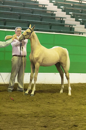 47 - OK Futurity Weanling Fillies