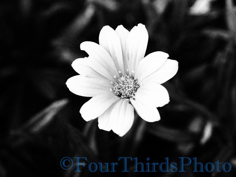E-620 sample shots - Flower Grany Film