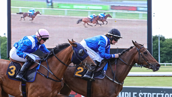 7 Arabian Racehorse Newsletter (0-95) Hcp 1m