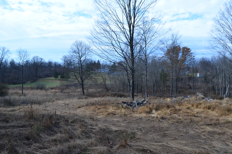 View of towards South Street from neighbor's property (Marc Fanelli)