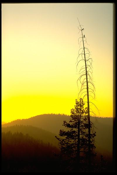 tree birds.jpg