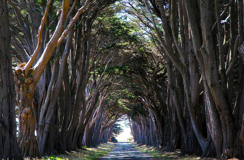 cypress tunnel.jpg