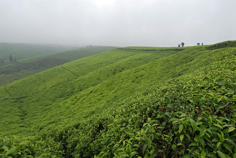 070113 3994 Burundi - Teza Mountains and Tea fields _E _L ~E ~L.JPG