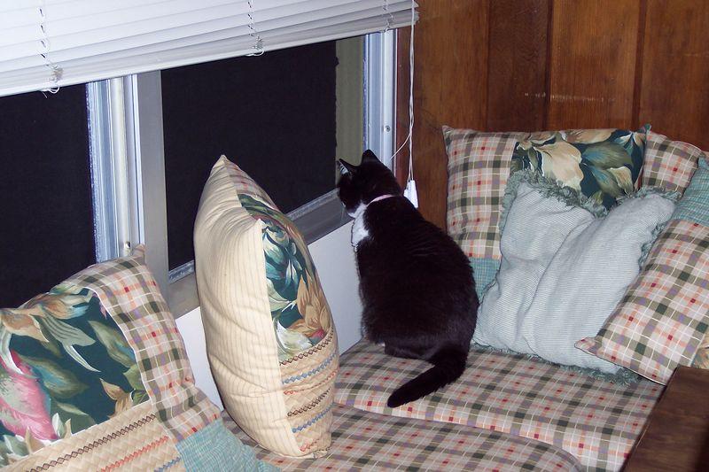 Olive in a favorite cat spot