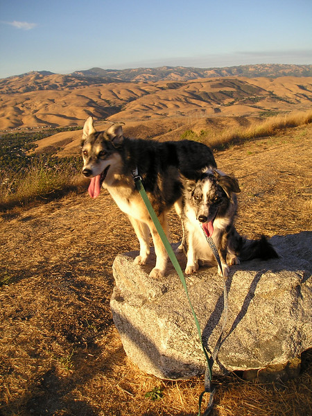 Tika and Boost get an even better view from here as the sun sinks steadily toward the horizon.