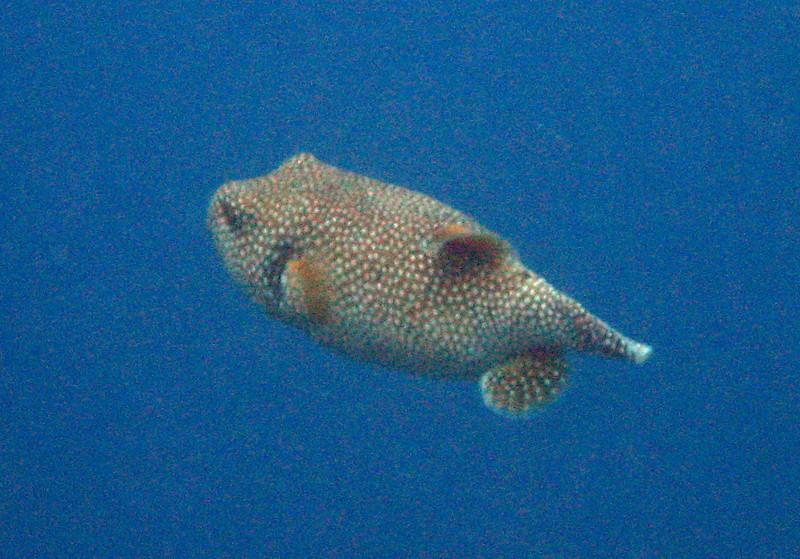486- 20080416- Hawaii 20-Snorkelling IMG_0708.jpg