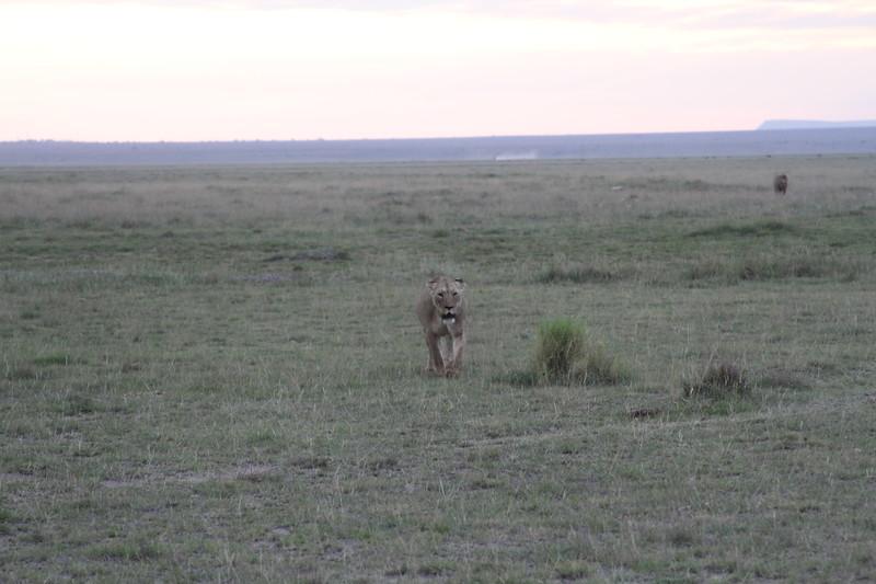 Kenya 2019 #2 1850.JPG