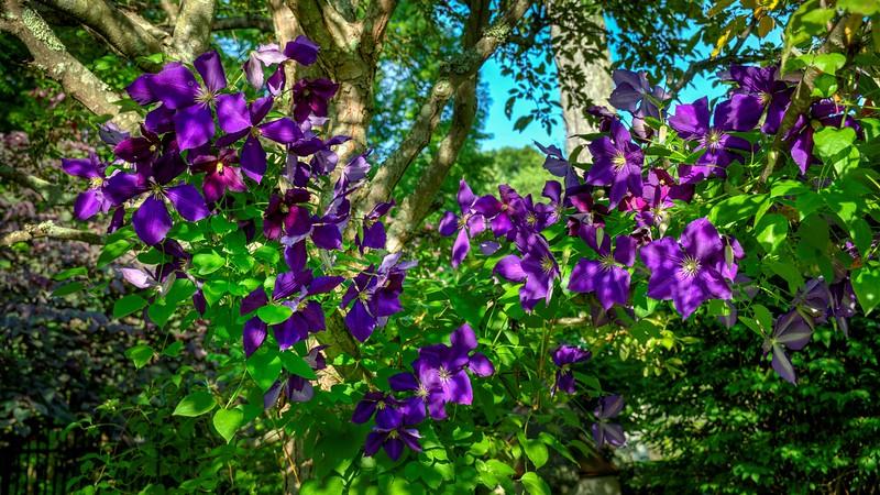 Garden 1, 043.jpg