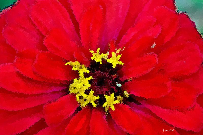 flower 6-18-2013.jpg