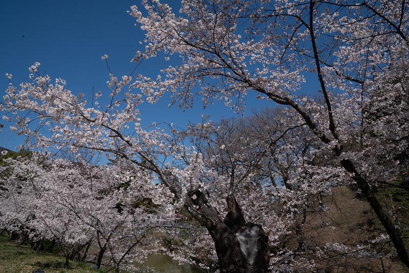 20190411-JapanTour-4610.jpg