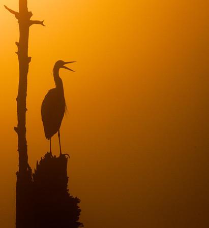 Viera Wetlands - March 29, 2012