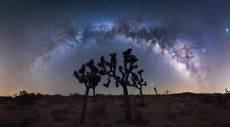 Joshua Tree Milkyway copy.jpg