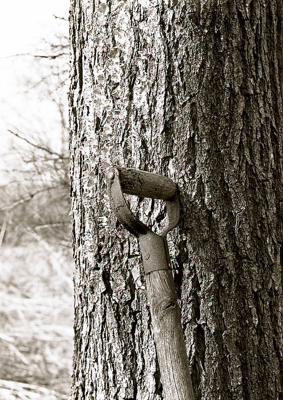 Oak tree shovel.jpg