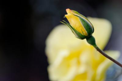 2011_09_Poppies