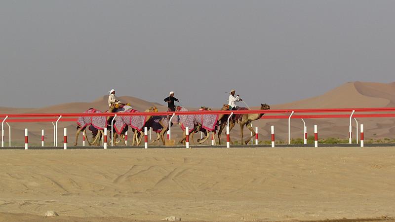 camel race.jpg