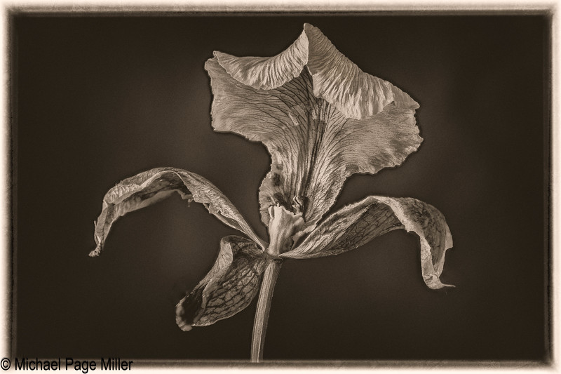 Orchid E 05-04-18-Edit.jpg