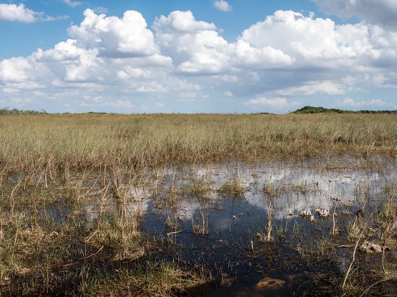 Everglades-78.jpg