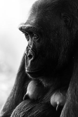 160522_Zoo Praha