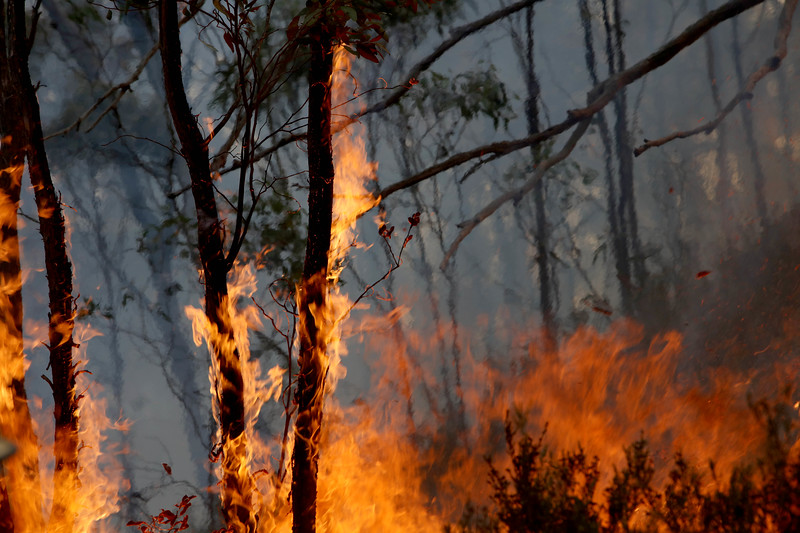 11. Australia Bushfires_08.JPG