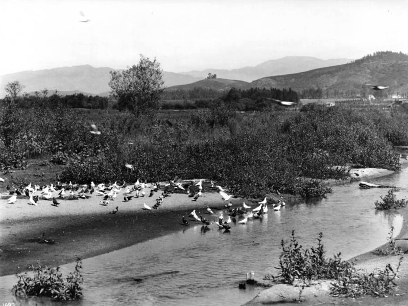 pigeons in the river ca 1900.jpg