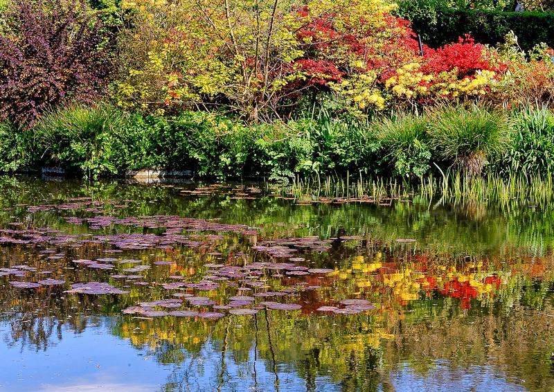 Giverny Claude  Monnet 's garden