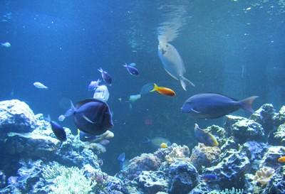 Trip to the Virginia Aquarium in Virginia Beach
