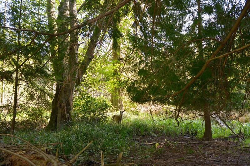 wetlands_07.JPG