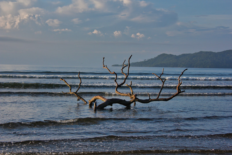 Driftwood in the ocean