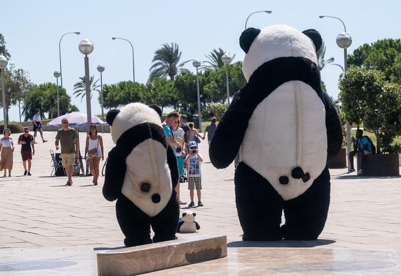 Palma de Mallorca-39.jpg