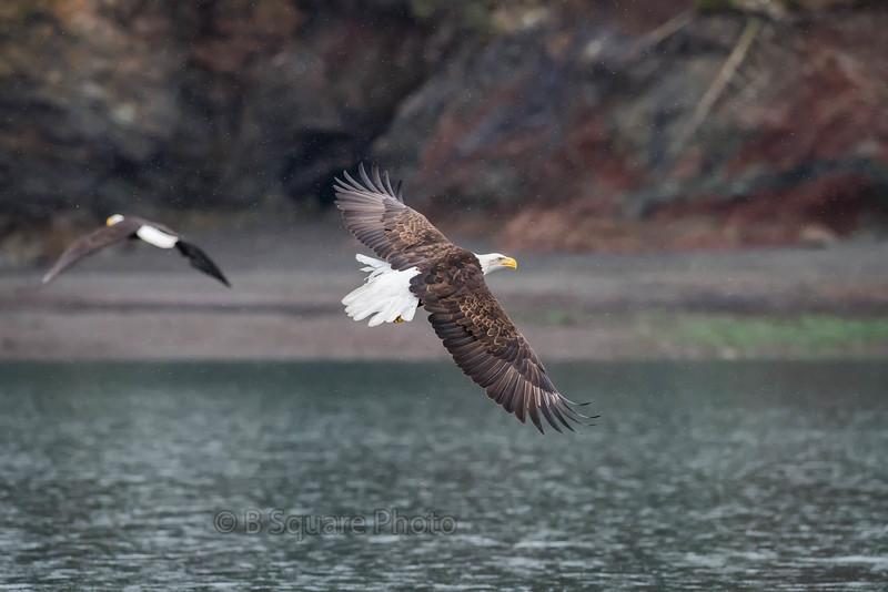 Eagle Photography