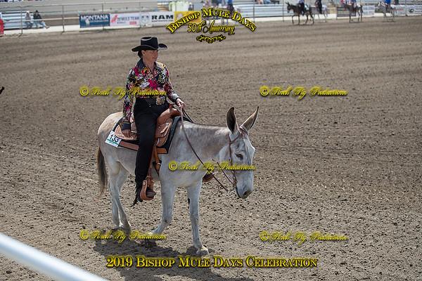 Donkey Western Riding