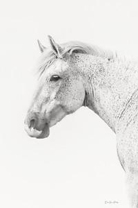B&W Equine
