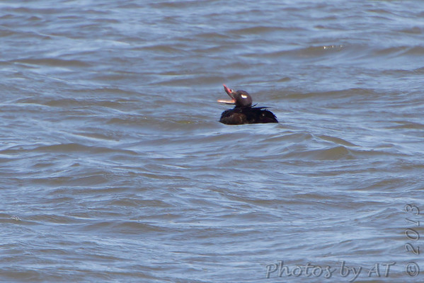 2013-02-13 Riverlands Migratory Bird Sanctuary
