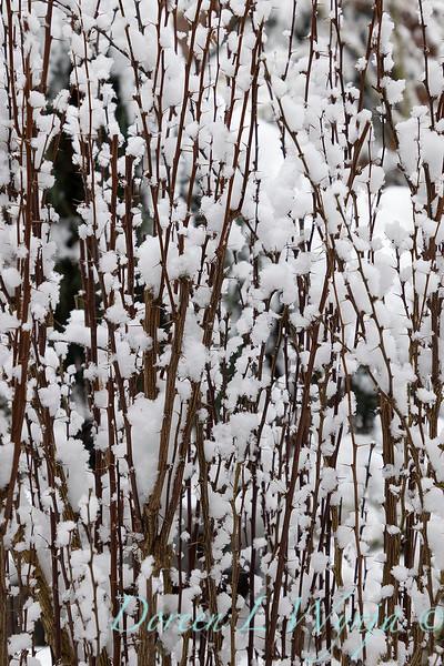 Winter wonderland_8829.jpg