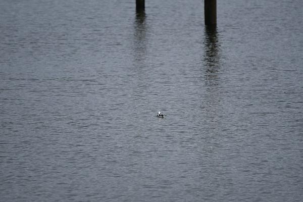Birding with Liz 1-21-17