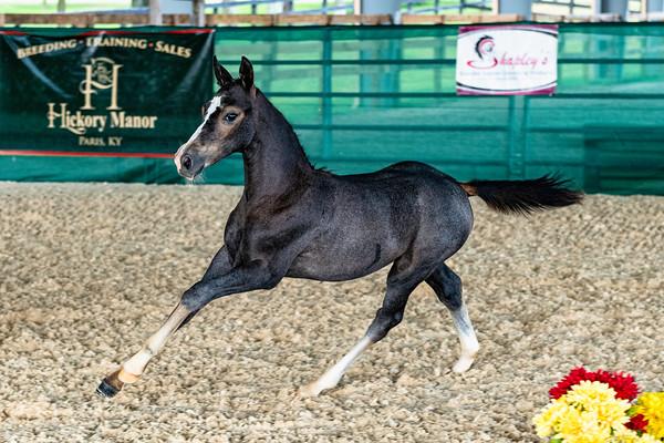 Olive - Pony foal Rhapsody HM