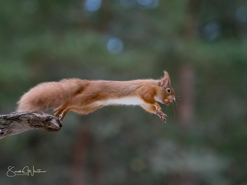 RedSquirrelBootCamp_120217_349.jpg