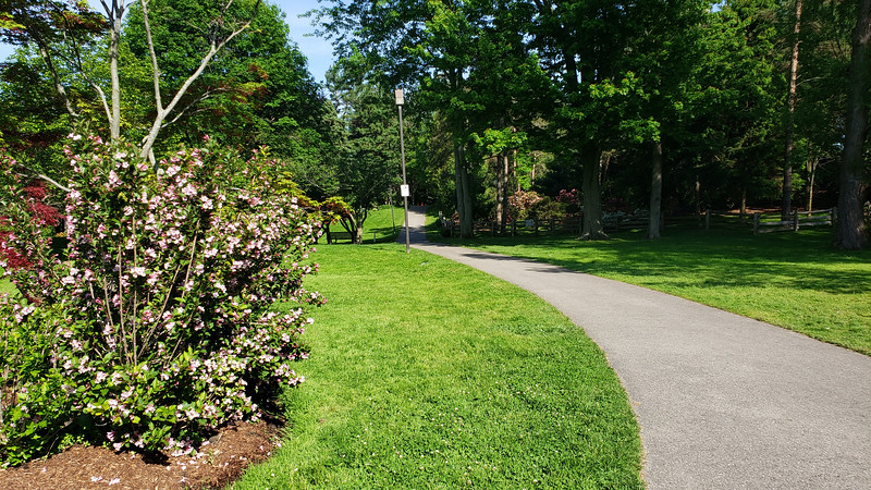 Ontario-Mississauga-PortCredit-RhododendronGarden-15.jpg